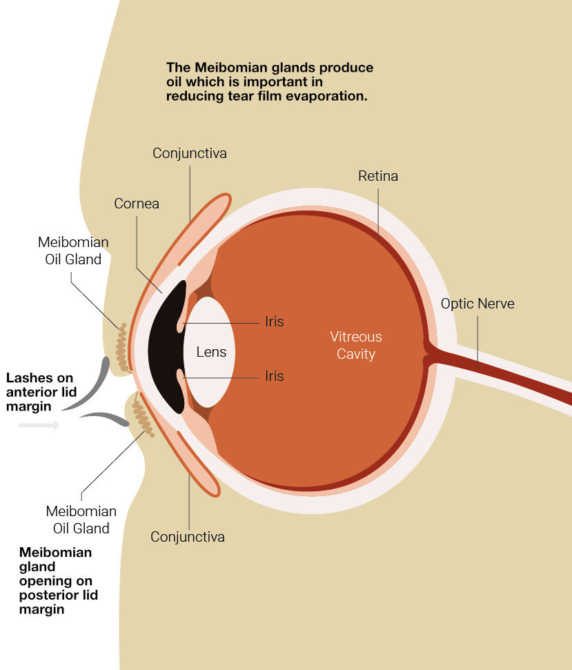 blepharitis_explained